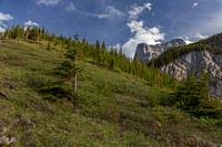 Treeline showing steep slopes leading to ridge below Little Sister