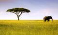 Serengeti Icons